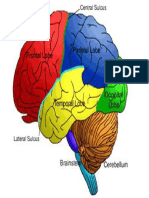 Neuroscience Neuropsychology Neuropsychiatry Brain Mind Introduction Primer Overview Nodrm