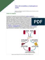 Efectos metabólicos de la insulina y el glucagón en los diferentes tejidos.docx
