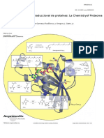 Protein Posttranslational Modifications.en.Es