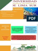 EXPOSICION Sistema Marino
