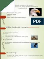 EXPONER AGUILA Y SALVIA.pptx