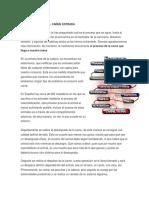 Proceso Industrial Carne Estrada