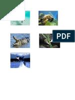 Animales Acuaticos Imagenes