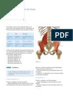 Anatomie Van Het Bovenbeen