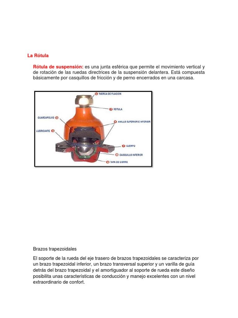 Asombroso Junta De Rótula Esférica Ilustración - Anatomía de Las ...