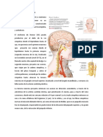 6.Sindrome de Horner