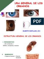 08-15 Estructura General de Los Organos (1)