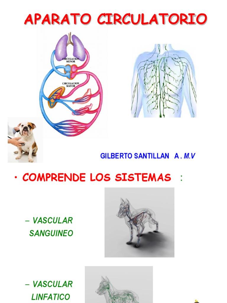 09-15 Aparato Circulatorio