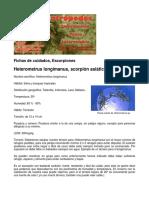 Heterometrus Longimanus