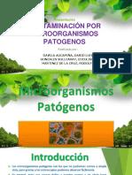 Contaminacion Por Microorganismos Patogenos