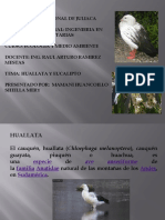 Huallata