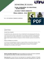 zorrino- pino.pptx