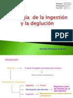 Fisiologia de La Ingestion y Deglucion