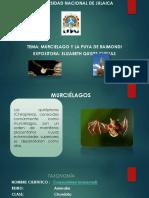 Murcielago Puyas de Raimondi