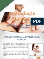 Prof André Romano - Reprodução Humana