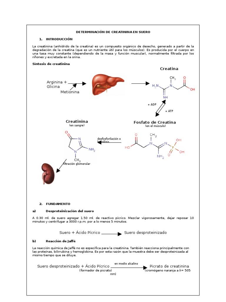valor normal de acido urico en embarazadas como se trata el acido urico que puedo tomar para el acido urico