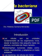 3- Célula bacteriana