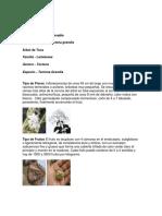 Trabajo Colaborativo Uno Botanica Economica
