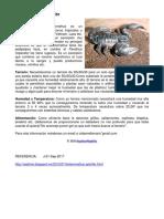 (YA) Heterometrus spinifer.pdf