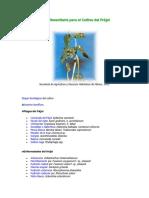 06-guia-fitosanitaria-del-Frijol.pdf