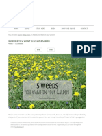 5 Weeds You Want in Your Garden _ Tenth Acre Farm