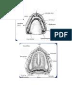 Partes de Un Articulador y Protesis