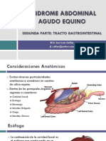 Clase 11. Tubo Digestivo Anatomia - Clase Full