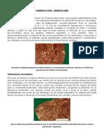 TUBERCULOSIS MORFOLOGIA.docx