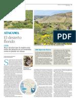 Atacama (Chile). El desierto florido (ABC VIAJAR 22 Septiembre 2017)