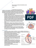 Copia de Tema 13 - Sistema Circulatorio (1)(1).docx