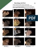 murcielagos del peru.pdf
