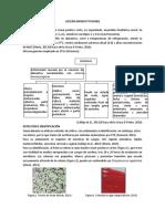 Flujograma Listeria