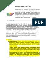 CIRCULO DE DEMING.docx