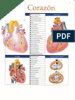 Edema e Insuficiencia Cardiaca