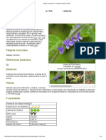 Hyptis Suaveolens - Plantas Tropicales Útiles
