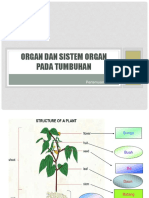 Organ Tumbuhan
