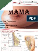4. Semiología Mama.otrogr