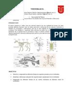 informe No 3 CORDADOS.doc