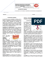 GUIA N0 4 IMPRIMIR (1).pdf
