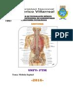 Informe Medula Espinal