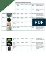Minerales Esenciales Formadores de Rocas Igneas