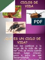 CICLOS DE VIDA.ppt