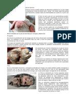 Guía de Enfermedades de La Piel en Perros