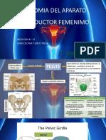 ANATOMIA DEL APARATO REPRODUCTOR FEMENIMO JEAN PIERRE.pptx