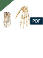 Esqueleto Dibujos