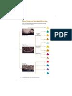 Claves Phrynosoma.pdf