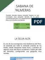 LA SABANA DE PALMERAS.pptx