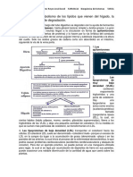 Transporte y metabolismo de los lípidos que vienen del hígado.docx