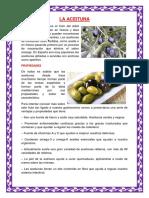 LA ACEITUNA.docx