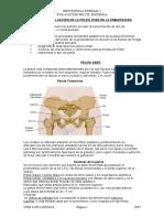1207664938.evaluación de la pelvis materna (1).doc